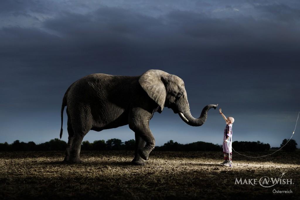 sujet-elefant